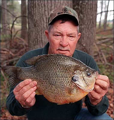 Chicago fishing reports chicago fishing forums view for Shell cracker fish