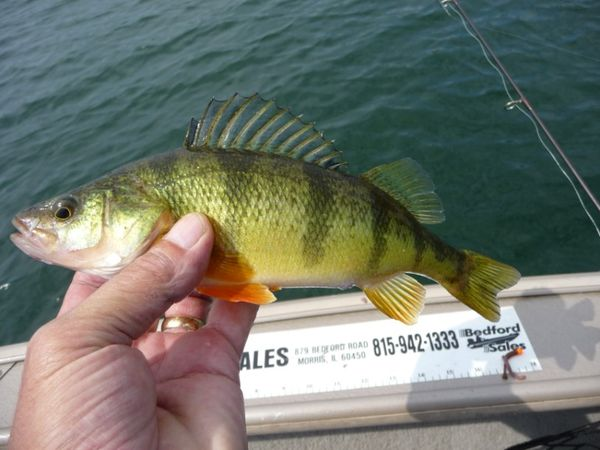 Chicago fishing reports chicago fishing forums view for Mighty mite fishing rod