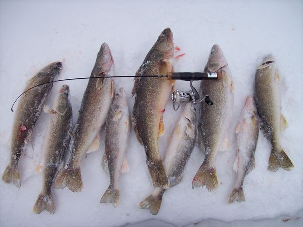 Chicago fishing reports chicago fishing forums view for Flash frozen fish